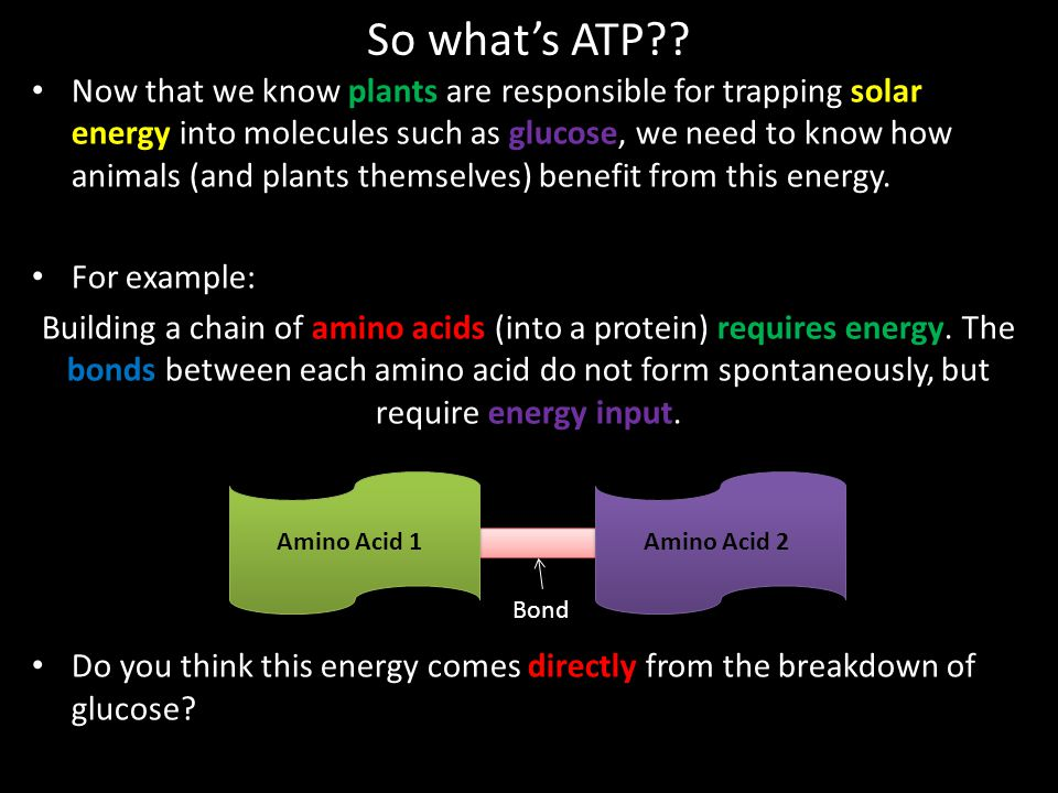 So what's ATP?? Now that we know plants are responsible for trapping solar energy into molecules such as glucose, we need to know how animals (and pla