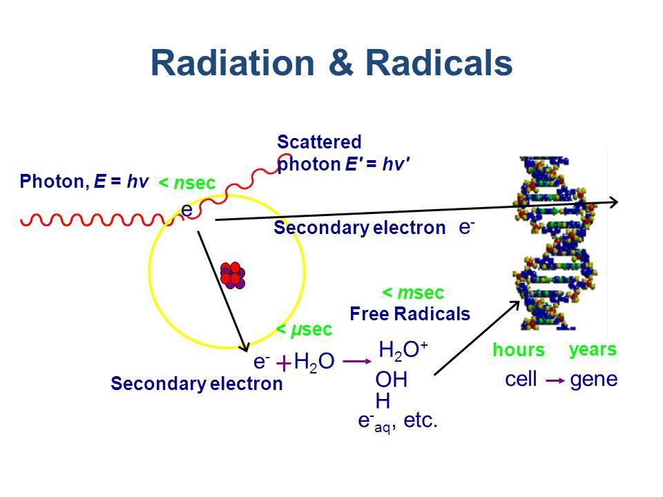 Radiation & Radicals e e-e- H2OH2O cellgene Photon, E = hv Scattered photon E = hv Secondary electron < nsec < μsec < msec hours years H2O+H2O+ OH H e - aq, etc.
