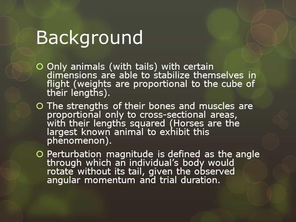 Background  Only animals (with tails) with certain dimensions are able to stabilize themselves in flight (weights are proportional to the cube of their lengths).