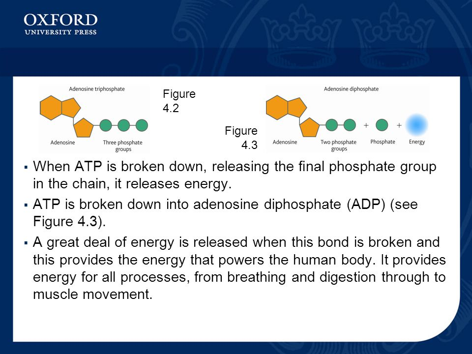  When ATP is broken down, releasing the final phosphate group in the chain, it releases energy.