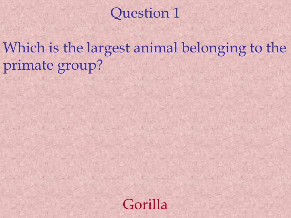 Question 1 Which is the largest animal belonging to the primate group? Gorilla