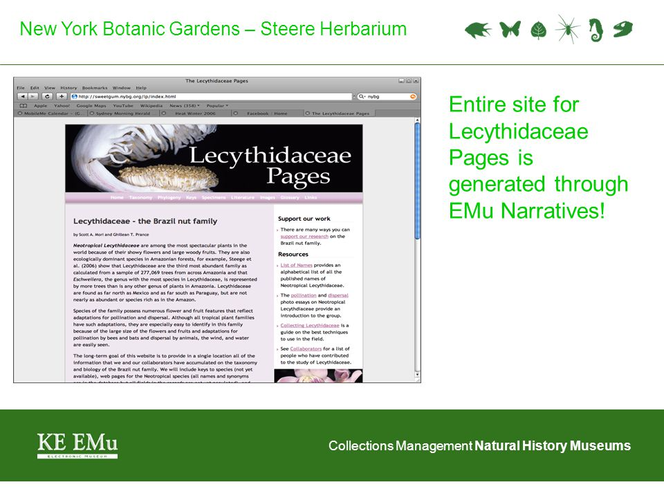 Collections Management Natural History Museums New York Botanic Gardens – Steere Herbarium Pages include: Overview Individual specimen data Taxon descriptions Glossary Multimedia Additional Resources