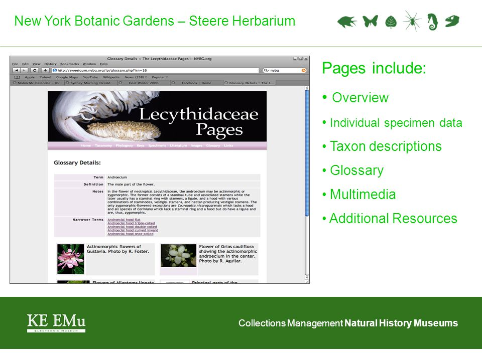 Collections Management Natural History Museums New York Botanic Gardens – Steere Herbarium