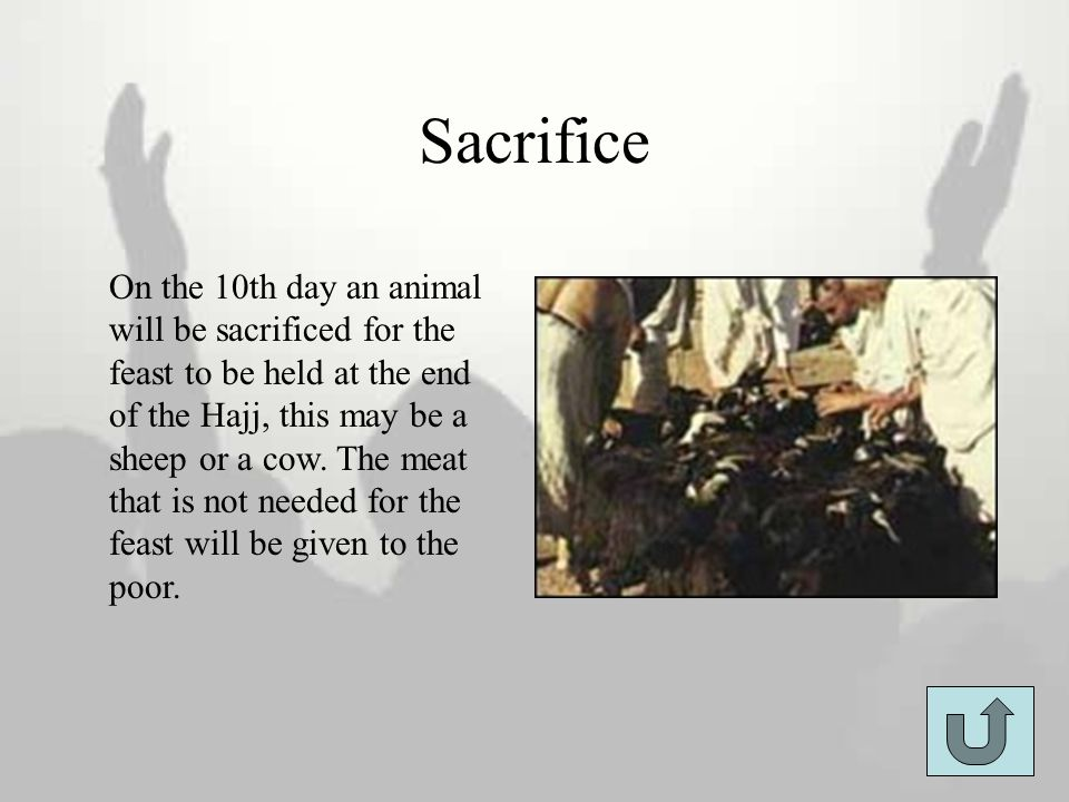 Sacrifice On the 10th day an animal will be sacrificed for the feast to be held at the end of the Hajj, this may be a sheep or a cow. The meat that is