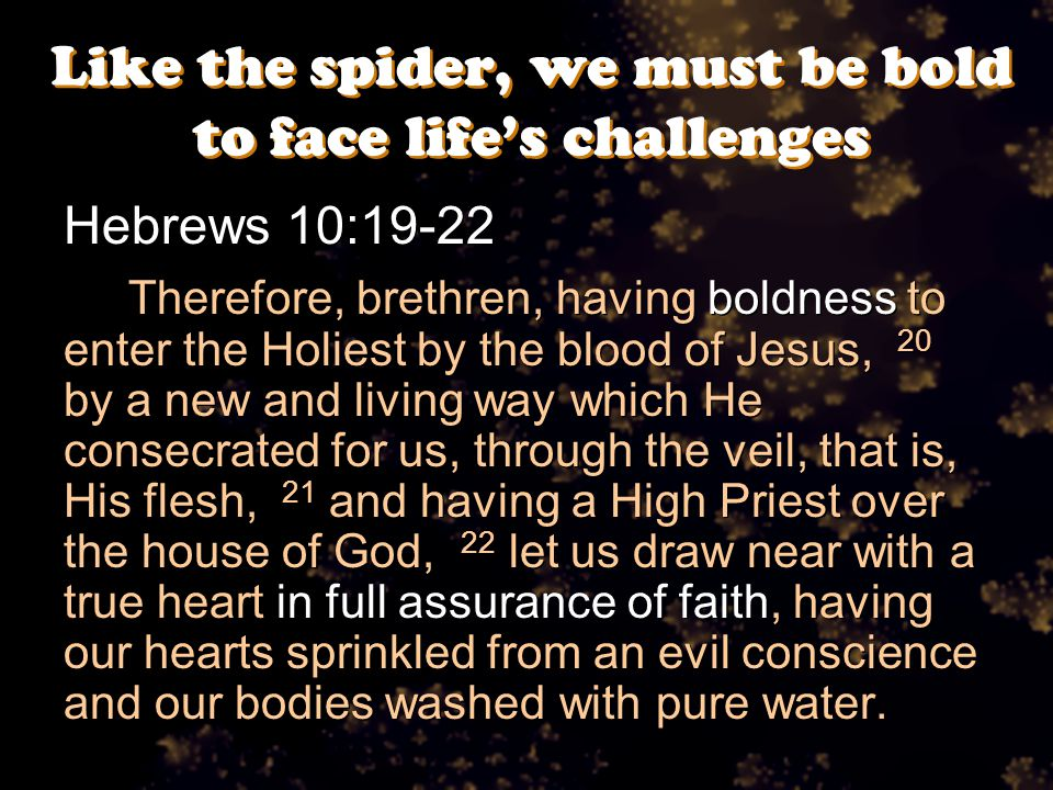 Like the spider, we must be bold to face life's challenges Hebrews 10:19-22 Therefore, brethren, having boldness to enter the Holiest by the blood of Jesus, 20 by a new and living way which He consecrated for us, through the veil, that is, His flesh, 21 and having a High Priest over the house of God, 22 let us draw near with a true heart in full assurance of faith, having our hearts sprinkled from an evil conscience and our bodies washed with pure water.