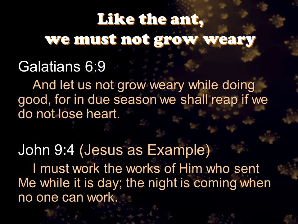 Like the ant, we must not grow weary Galatians 6:9 And let us not grow weary while doing good, for in due season we shall reap if we do not lose heart.