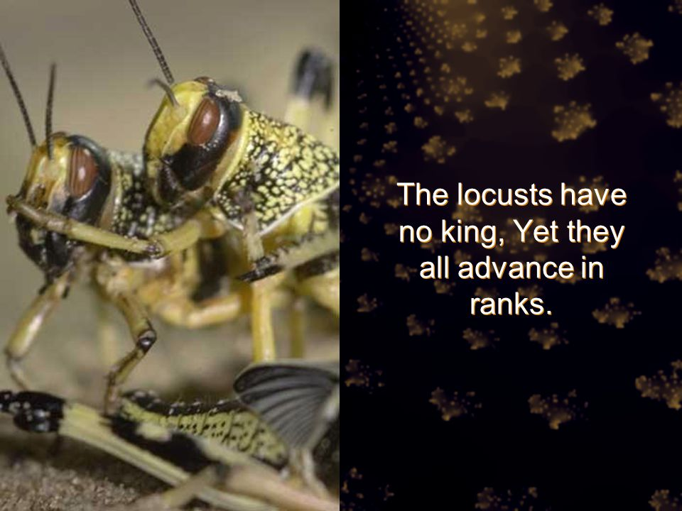 The locusts have no king, Yet they all advance in ranks.