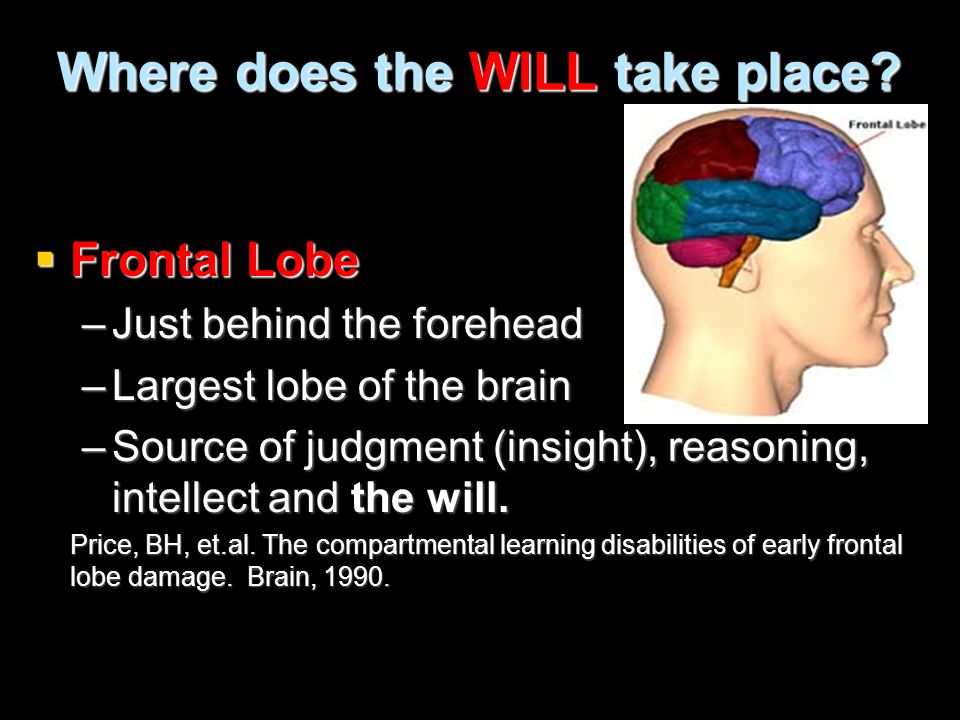 Where does the WILL take place?  Frontal Lobe –Just behind the forehead –Largest lobe of the brain –Source of judgment (insight), reasoning, intellec