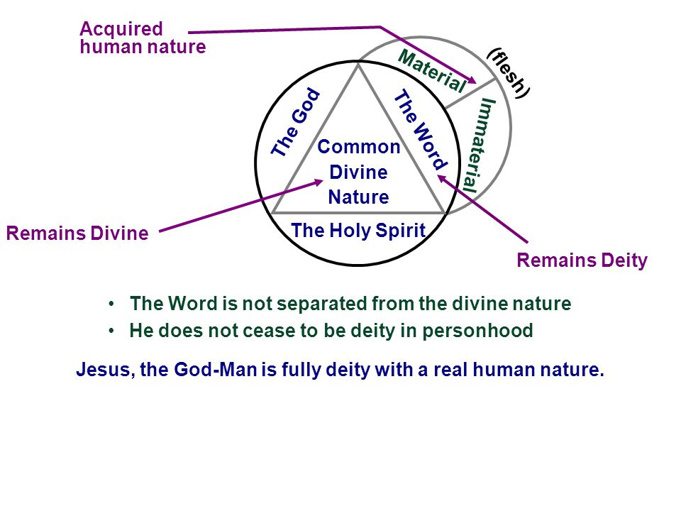 Material Immaterial (flesh) Remains Divine Acquired human nature The Holy Spirit The Word The God Common Divine Nature Remains Deity The Word is not s
