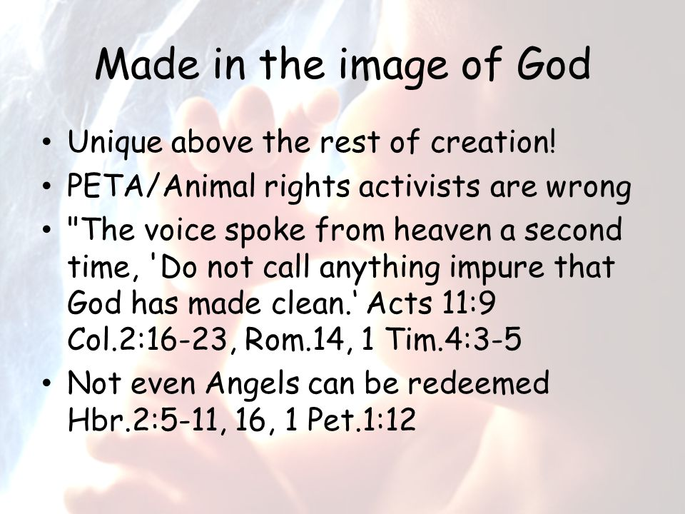 Made in the image of God Unique above the rest of creation.