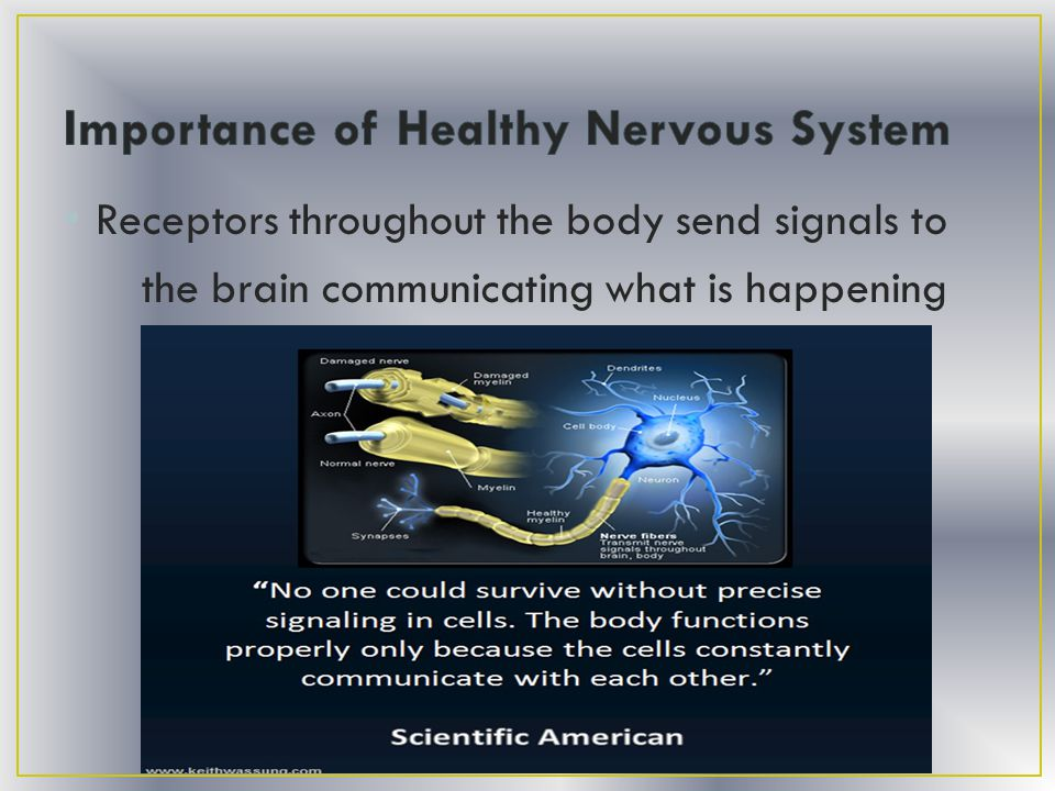 Receptors throughout the body send signals to the brain communicating what is happening