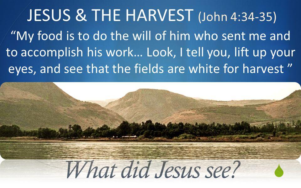  What did Jesus see.
