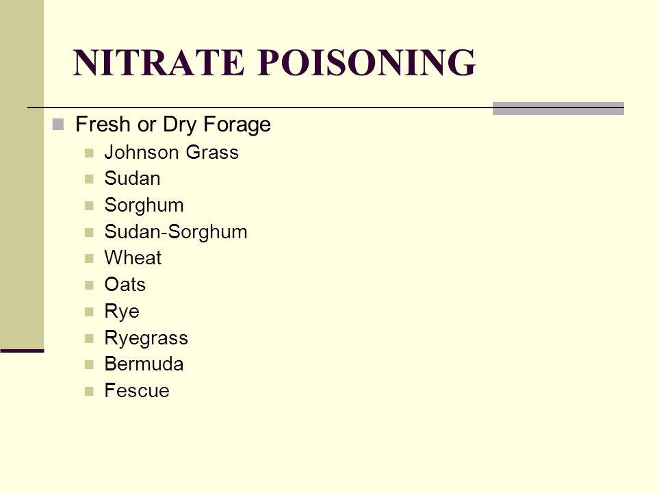 NITRATE POISONING Fresh or Dry Forage Johnson Grass Sudan Sorghum Sudan-Sorghum Wheat Oats Rye Ryegrass Bermuda Fescue