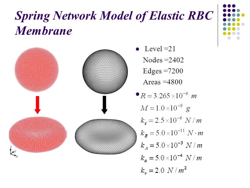 Spring Network Model of Elastic RBC Membrane