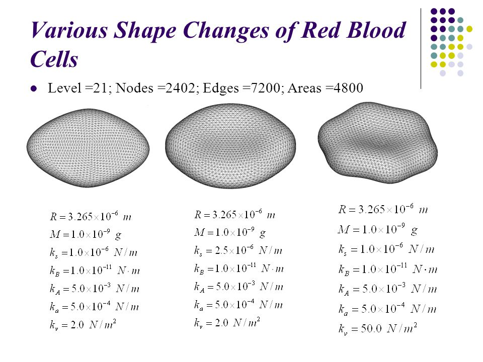 Various Shape Changes of a Swollen Red Blood t=0.1 t=0.3 t=0.5 t=0.7 t=1.0 t=0