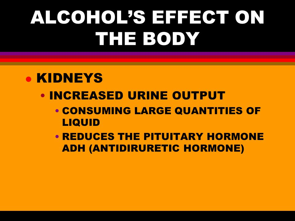 ALCOHOL'S EFFECT ON THE BODY l KIDNEYS INCREASED URINE OUTPUT CONSUMING LARGE QUANTITIES OF LIQUID REDUCES THE PITUITARY HORMONE ADH (ANTIDIRURETIC HORMONE)