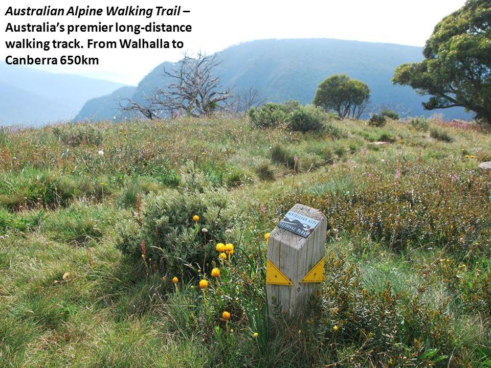 Australian Alpine Walking Trail – Australia's premier long-distance walking track.