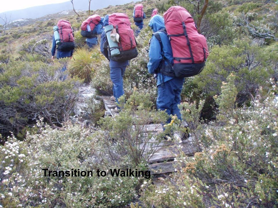 Transition to Walking