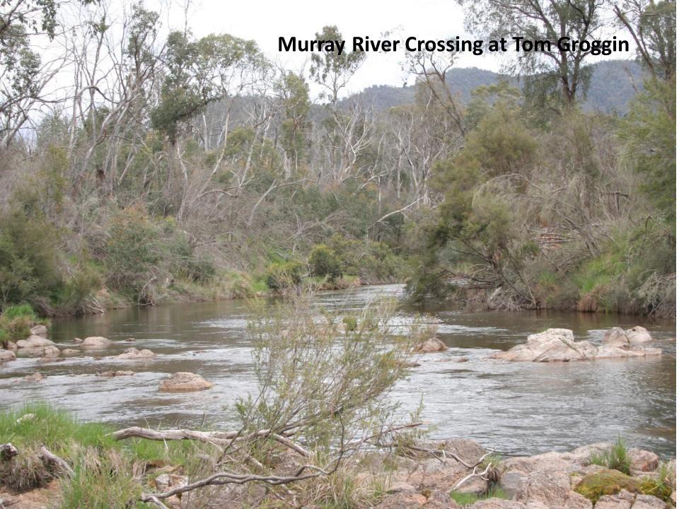 Murray River Crossing at Tom Groggin