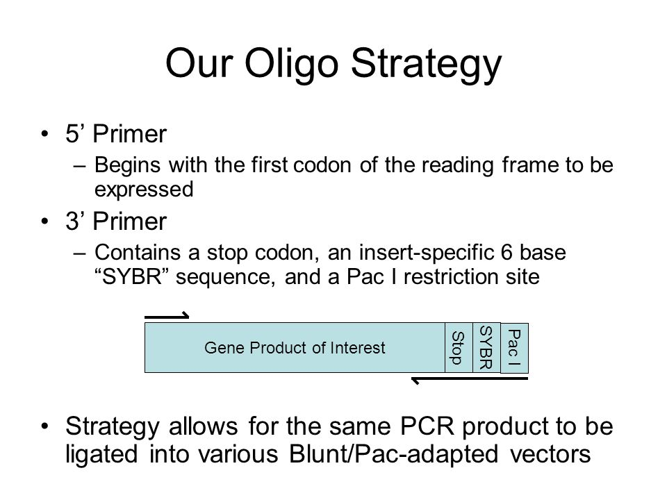 Our Oligo Strategy 5' Primer –Begins with the first codon of the reading frame to be expressed 3' Primer –Contains a stop codon, an insert-specific 6 base SYBR sequence, and a Pac I restriction site Strategy allows for the same PCR product to be ligated into various Blunt/Pac-adapted vectors Gene Product of Interest StopSYBR Pac I