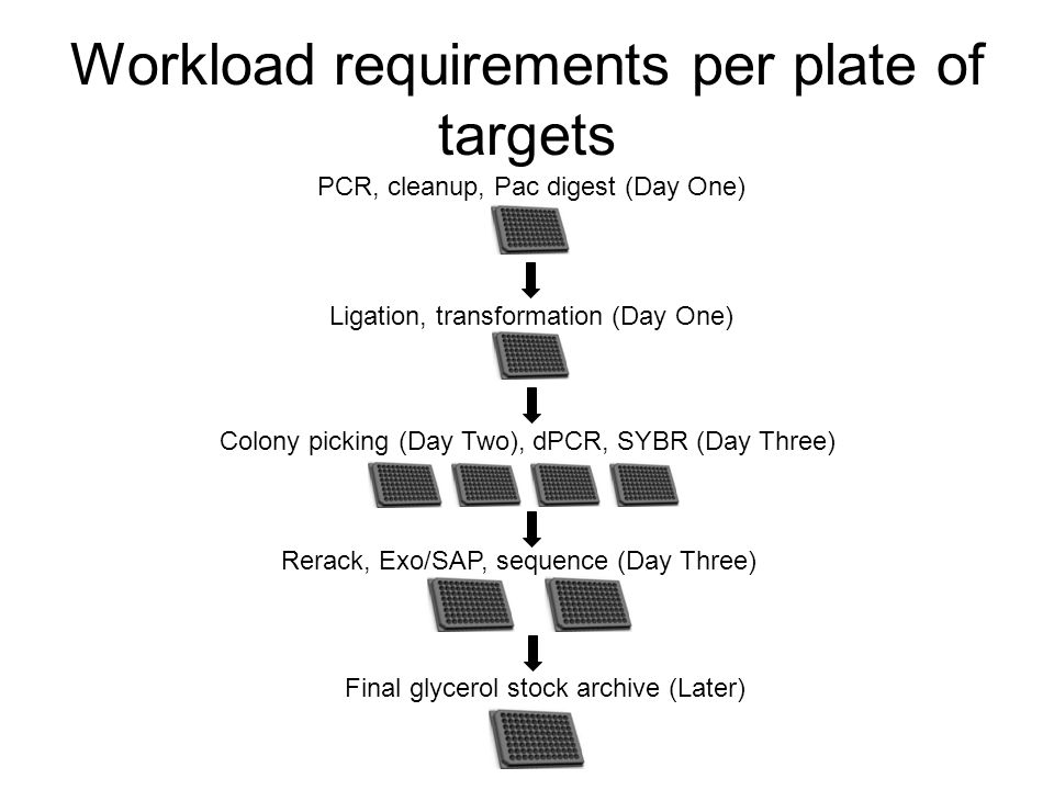 Workload requirements per plate of targets Final glycerol stock archive (Later) Rerack, Exo/SAP, sequence (Day Three) Colony picking (Day Two), dPCR, SYBR (Day Three) Ligation, transformation (Day One) PCR, cleanup, Pac digest (Day One)