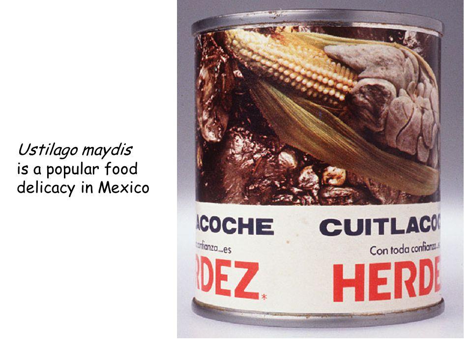 Ustilago maydis is a popular food delicacy in Mexico
