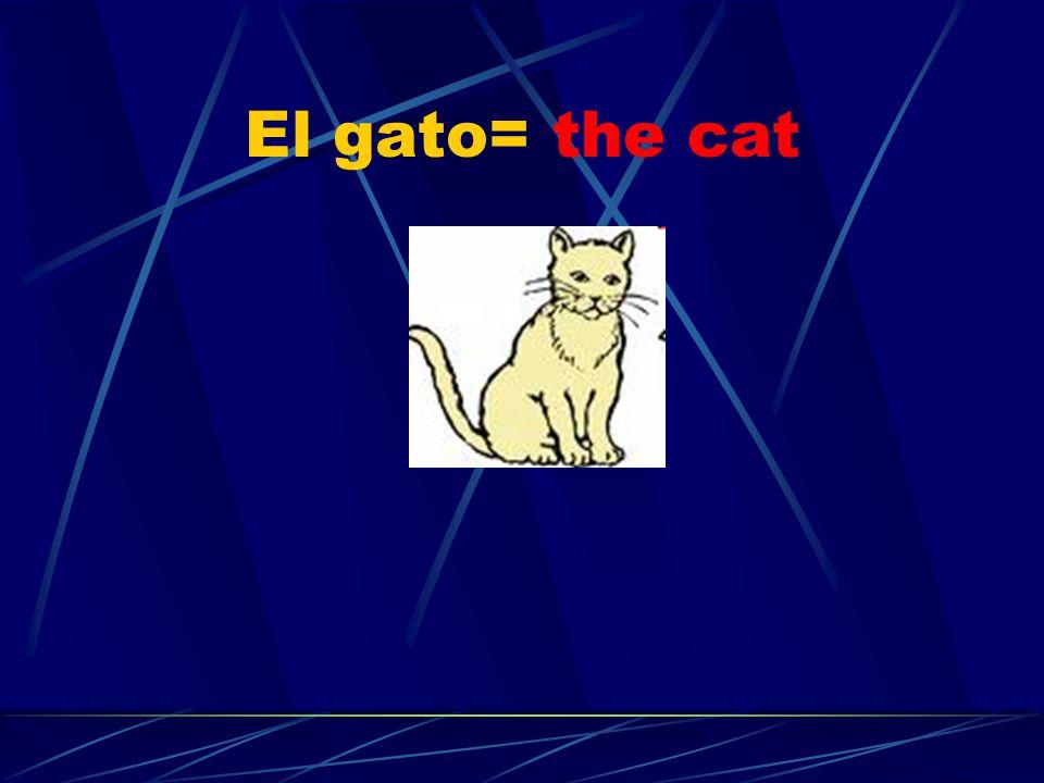 El gato= the cat