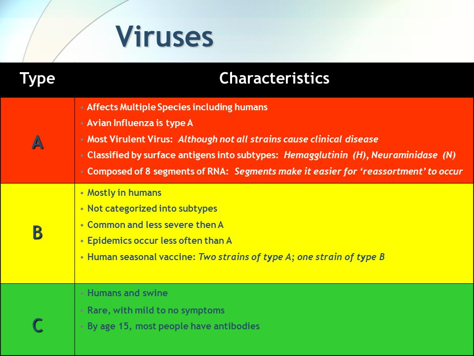 Viruses TypeCharacteristics A Affects Multiple Species including humans Avian Influenza is type A Most Virulent Virus: Although not all strains cause clinical disease Classified by surface antigens into subtypes: Hemagglutinin (H), Neuraminidase (N) Composed of 8 segments of RNA: Segments make it easier for 'reassortment' to occur B Mostly in humans Not categorized into subtypes Common and less severe then A Epidemics occur less often than A Human seasonal vaccine: Two strains of type A; one strain of type B C Humans and swine Rare, with mild to no symptoms By age 15, most people have antibodies