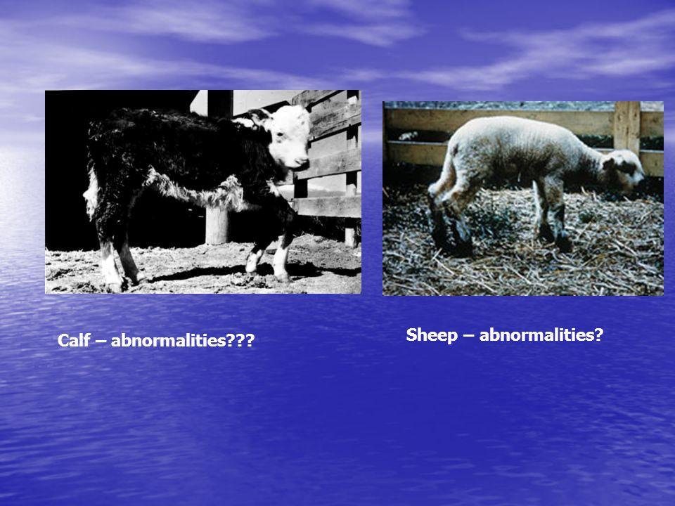 Calf – abnormalities??? Sheep – abnormalities?