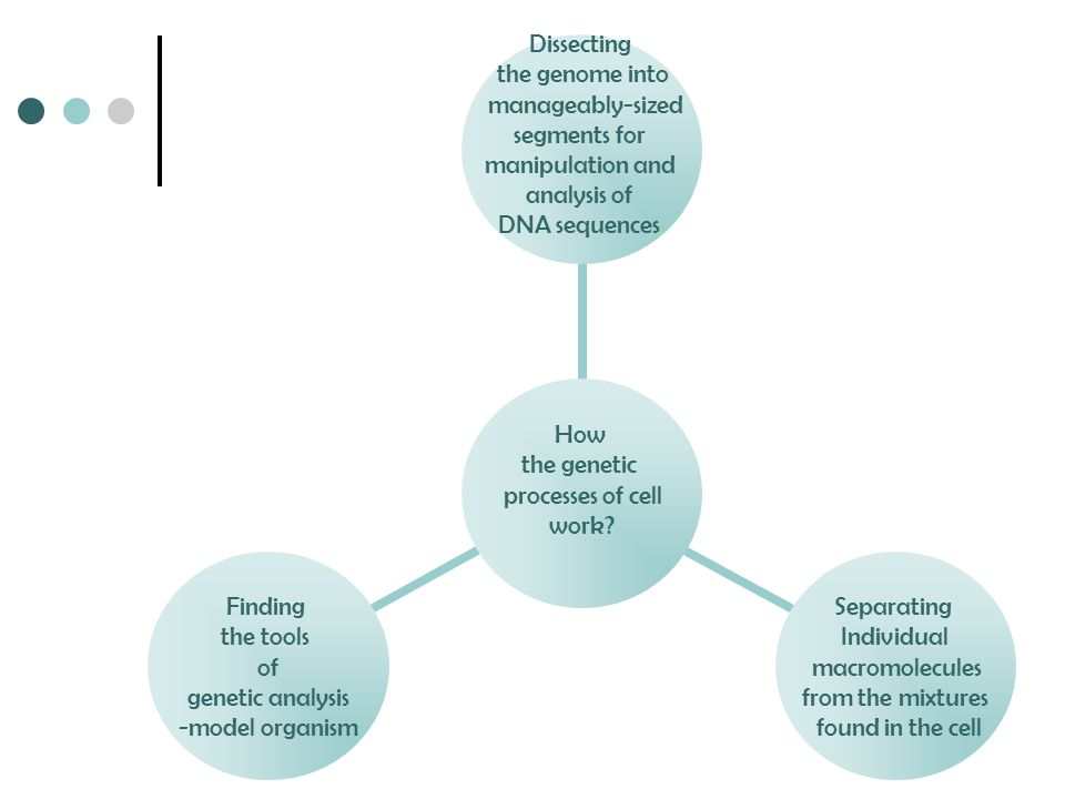 How the genetic processes of cell work? Dissecting the genome into manageably-sized segments for manipulation and analysis of DNA sequences Separating