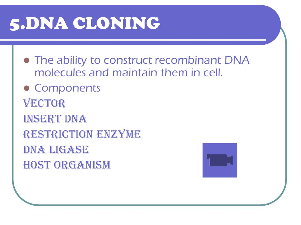 5.DNA CLONING The ability to construct recombinant DNA molecules and maintain them in cell. Components Vector insert DNA Restriction enzyme Dna ligase