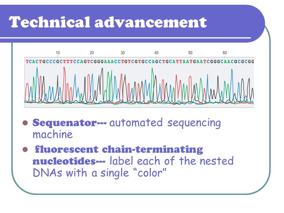 Technical advancement Sequenator--- automated sequencing machine fluorescent chain-terminating nucleotides--- label each of the nested DNAs with a sin