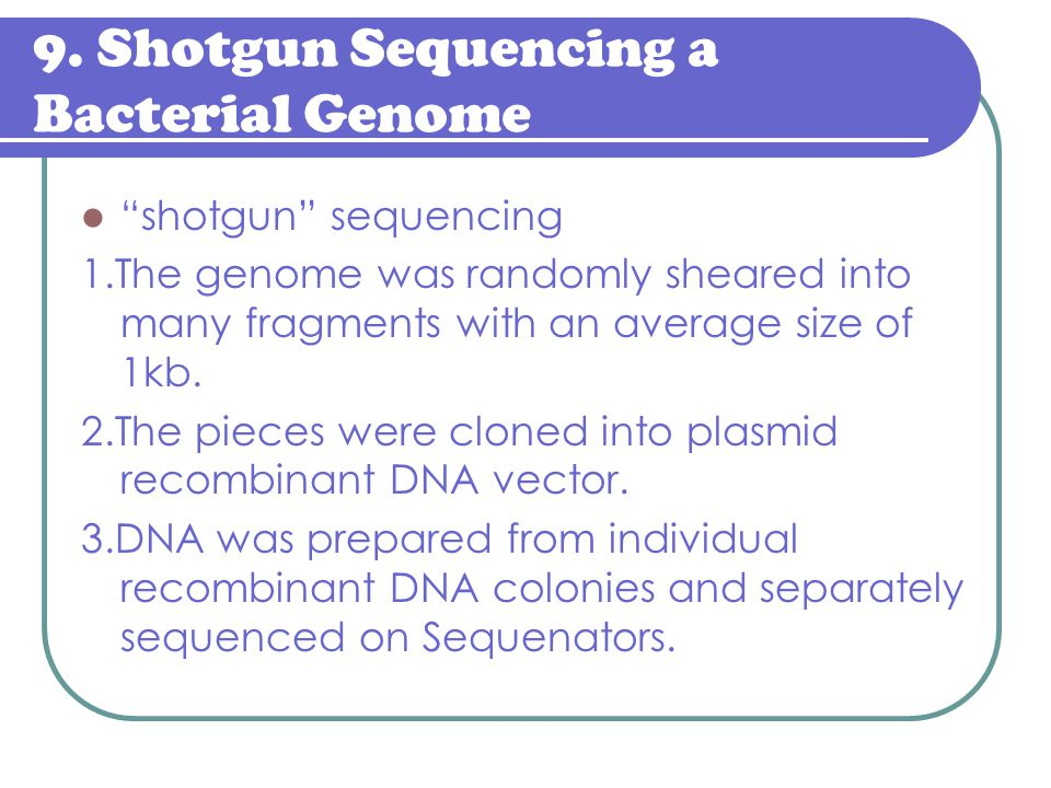 """9. Shotgun Sequencing a Bacterial Genome """"shotgun"""" sequencing 1.The genome was randomly sheared into many fragments with an average size of 1kb. 2.The"""