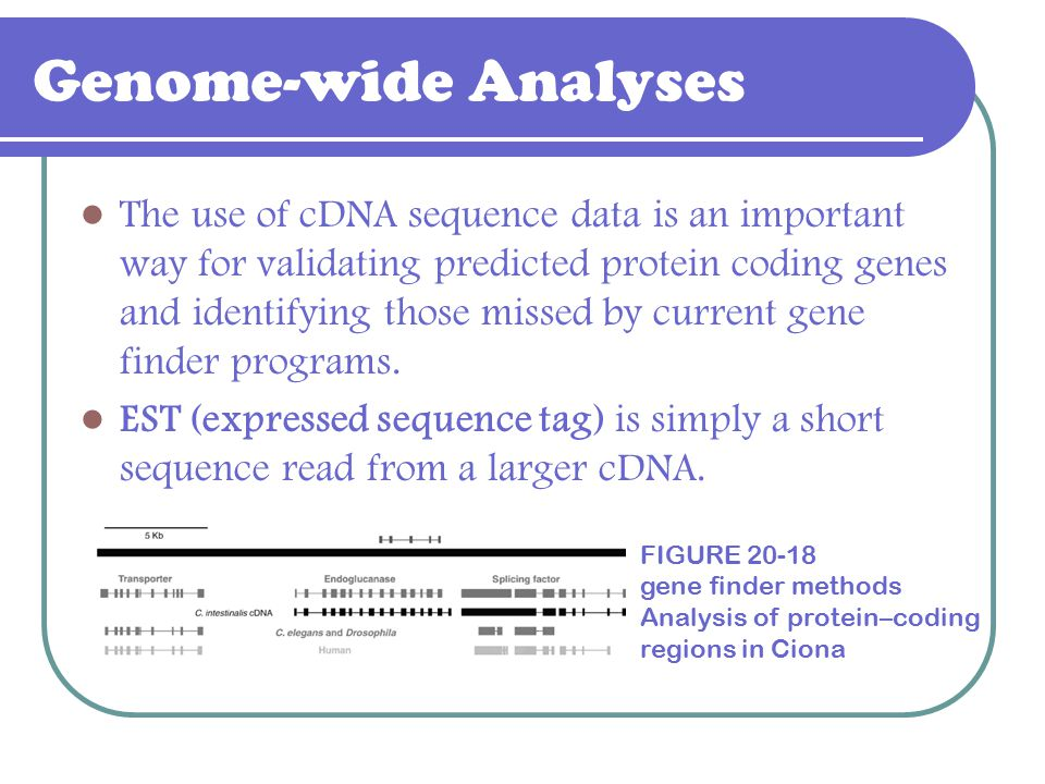Genome-wide Analyses The use of cDNA sequence data is an important way for validating predicted protein coding genes and identifying those missed by c