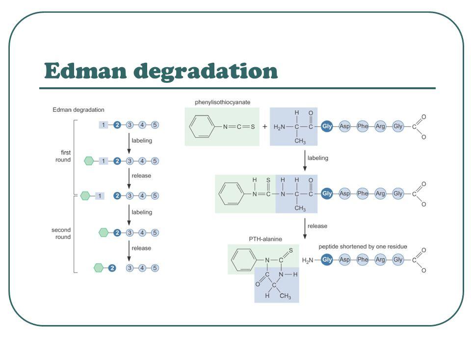 Edman degradation