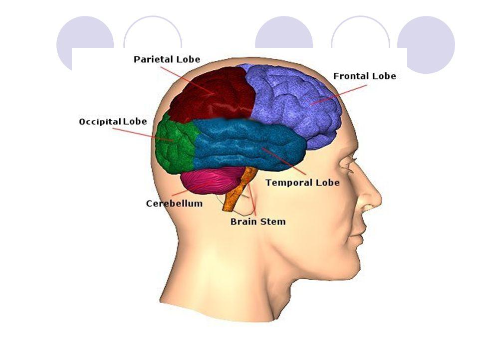 References: http://www.neuroskills.com/brain.shtml http://www.mayoclinic.com/health/ataxia/D S00910 http://www.mayoclinic.com/health/ataxia/D S00910 http://www.umm.edu/imagepages/18008.h tm http://www.umm.edu/imagepages/18008.h tm http://en.wikipedia.org/wiki/Ataxia_telangie ctasia http://en.wikipedia.org/wiki/Ataxia_telangie ctasia