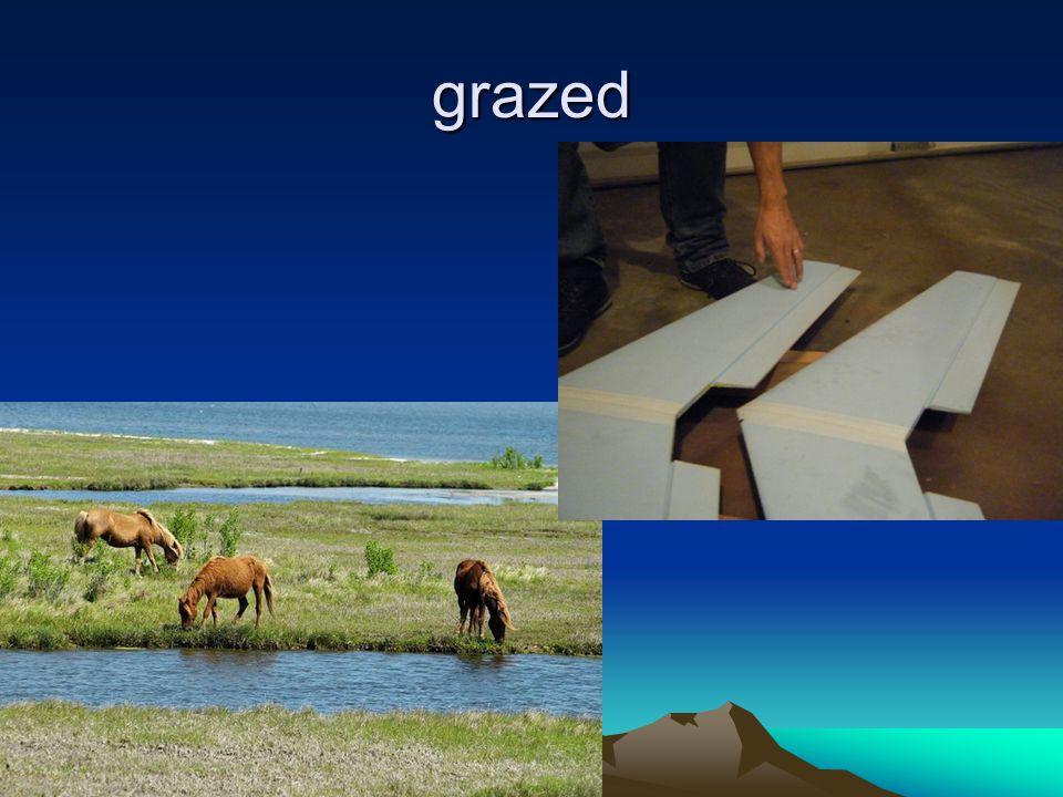 grazed