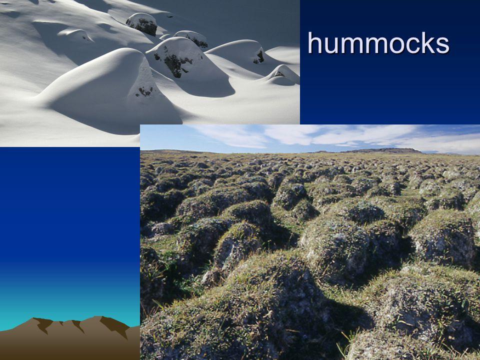 hummocks hummocks