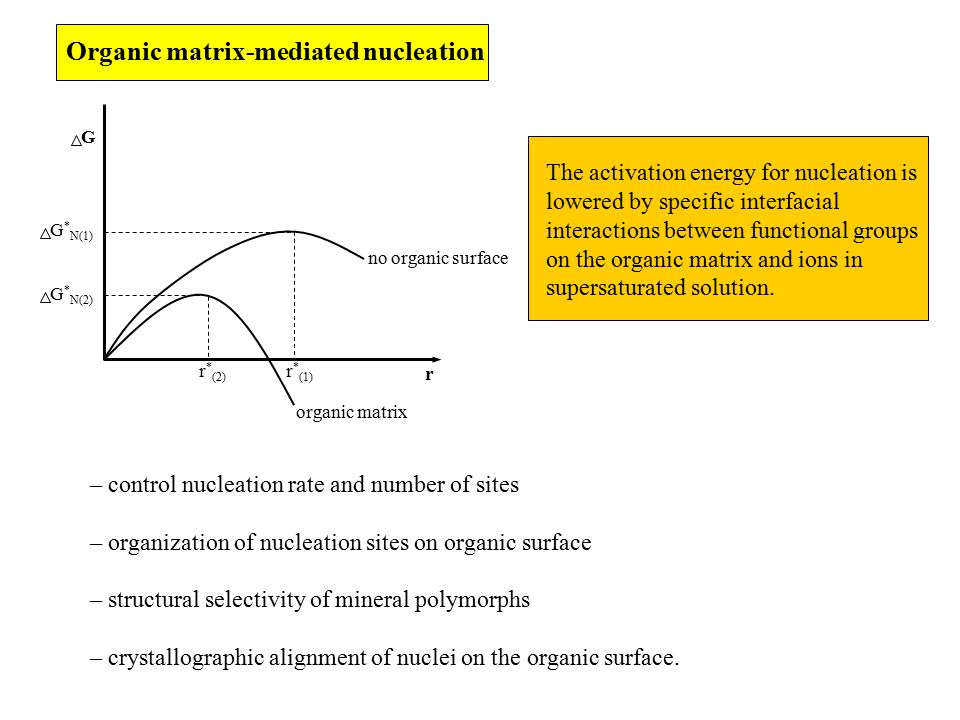 Organic matrix-mediated nucleation The activation energy for nucleation is lowered by specific interfacial interactions between functional groups on the organic matrix and ions in supersaturated solution.