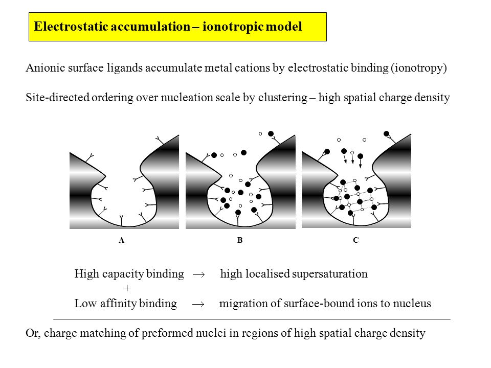 Electrostatic accumulation – ionotropic model Anionic surface ligands accumulate metal cations by electrostatic binding (ionotropy) Site-directed ordering over nucleation scale by clustering – high spatial charge density High capacity binding  high localised supersaturation + Low affinity binding  migration of surface-bound ions to nucleus Or, charge matching of preformed nuclei in regions of high spatial charge density ABC