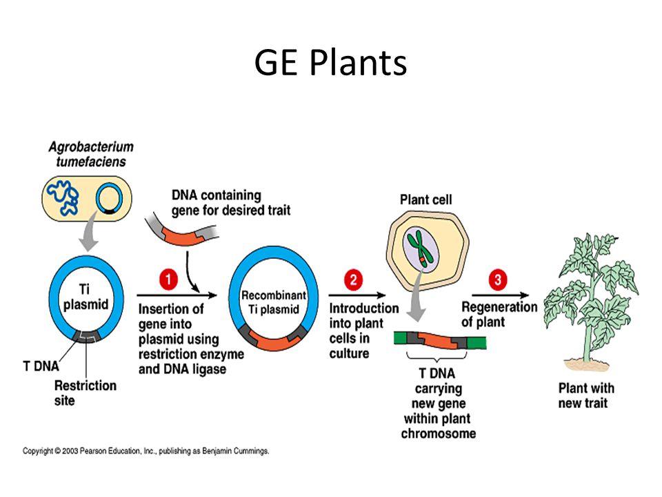 GE Plants
