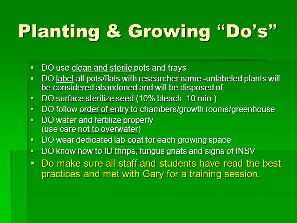 Potting Room 100 BSF  No seeds are permitted in the potting area, room 100 BSF to prevent contamination of media  Fill pots in 100 BSF then plant seeds in room 160A, the greenhouse or your lab  For Arabidopsis, 3 scoops of media = 1 flat.