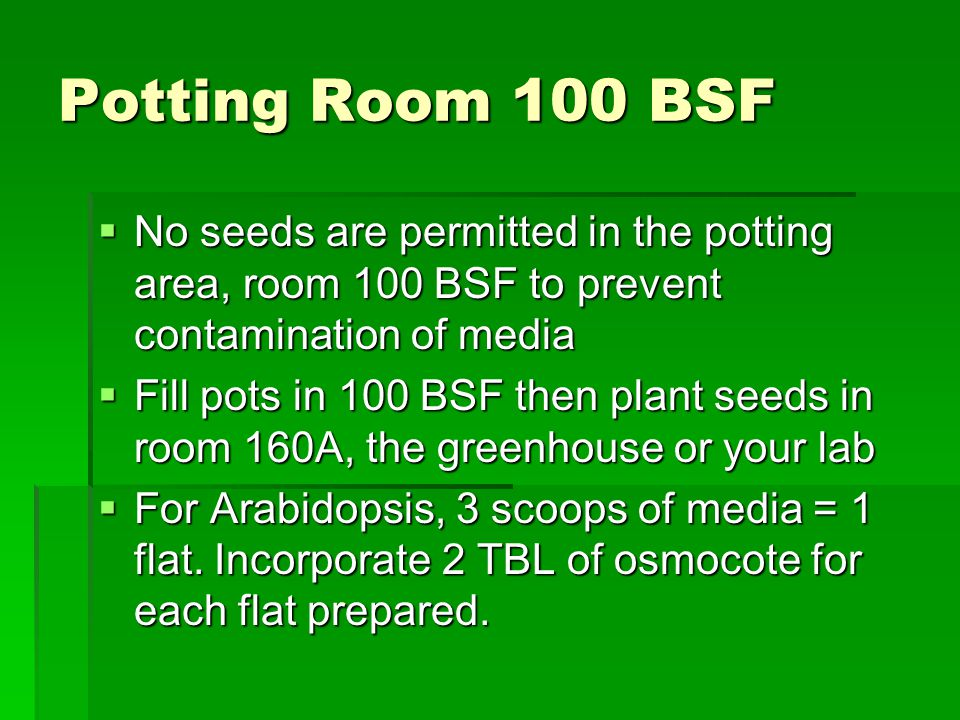 Potting Room 100 BSF  No seeds are permitted in the potting area, room 100 BSF to prevent contamination of media  Fill pots in 100 BSF then plant se
