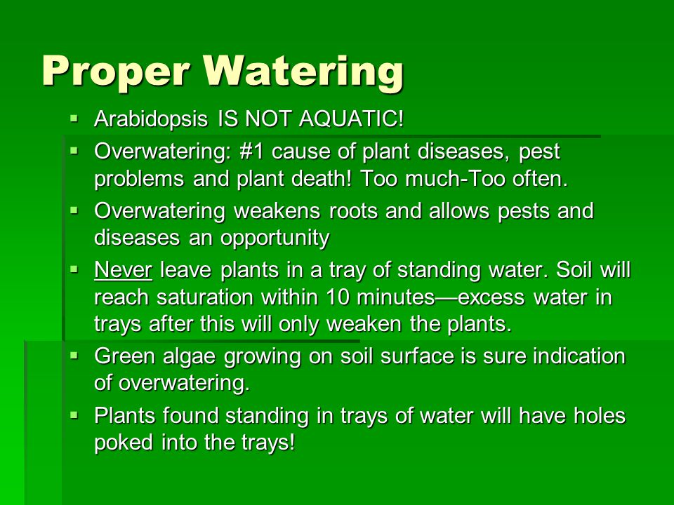 Proper Watering  Arabidopsis IS NOT AQUATIC!  Overwatering: #1 cause of plant diseases, pest problems and plant death! Too much-Too often.  Overwat