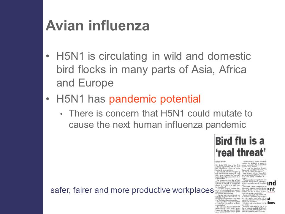 safer, fairer and more productive workplaces Avian influenza H5N1 is circulating in wild and domestic bird flocks in many parts of Asia, Africa and Europe H5N1 has pandemic potential There is concern that H5N1 could mutate to cause the next human influenza pandemic