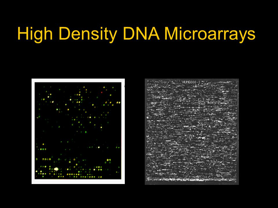 High Density DNA Microarrays