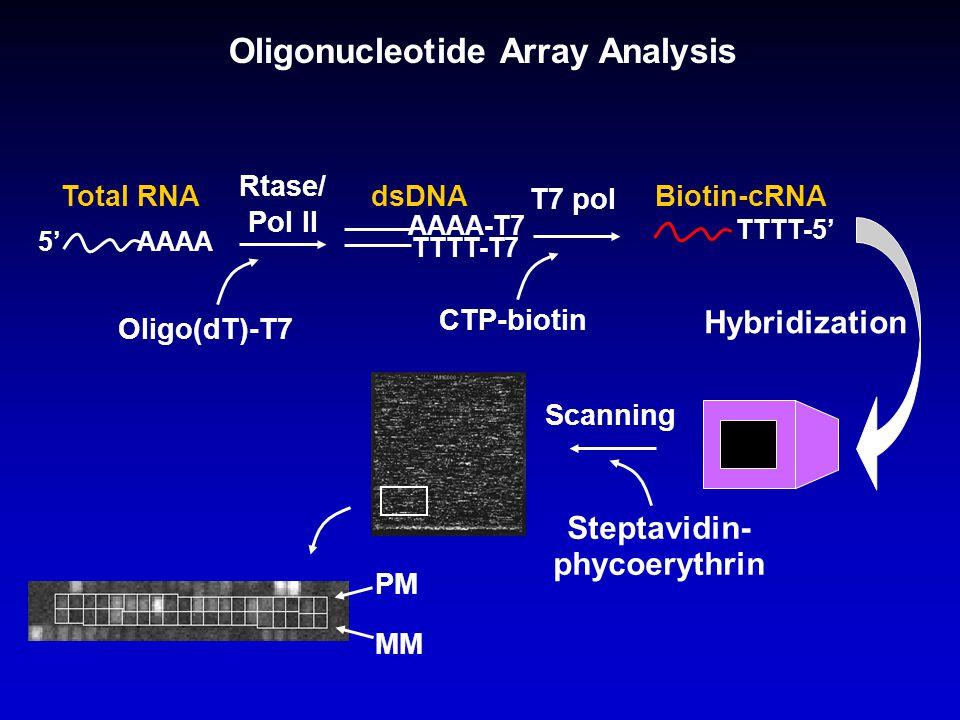 Oligonucleotide Array Analysis AAAA Oligo(dT)-T7 Total RNA Rtase/ Pol II dsDNA AAAA-T7 TTTT-T7 CTP-biotin T7 pol TTTT-5' 5' Biotin-cRNA Hybridization Steptavidin- phycoerythrin Scanning PM MM