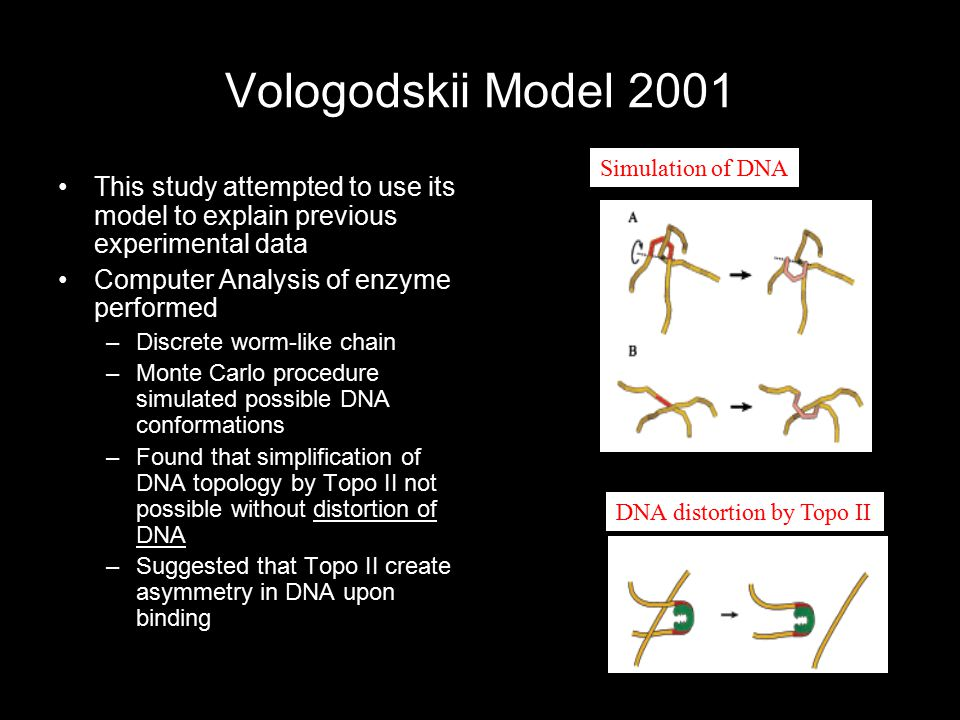 Vologodskii Model 2001 This study attempted to use its model to explain previous experimental data Computer Analysis of enzyme performed –Discrete wor