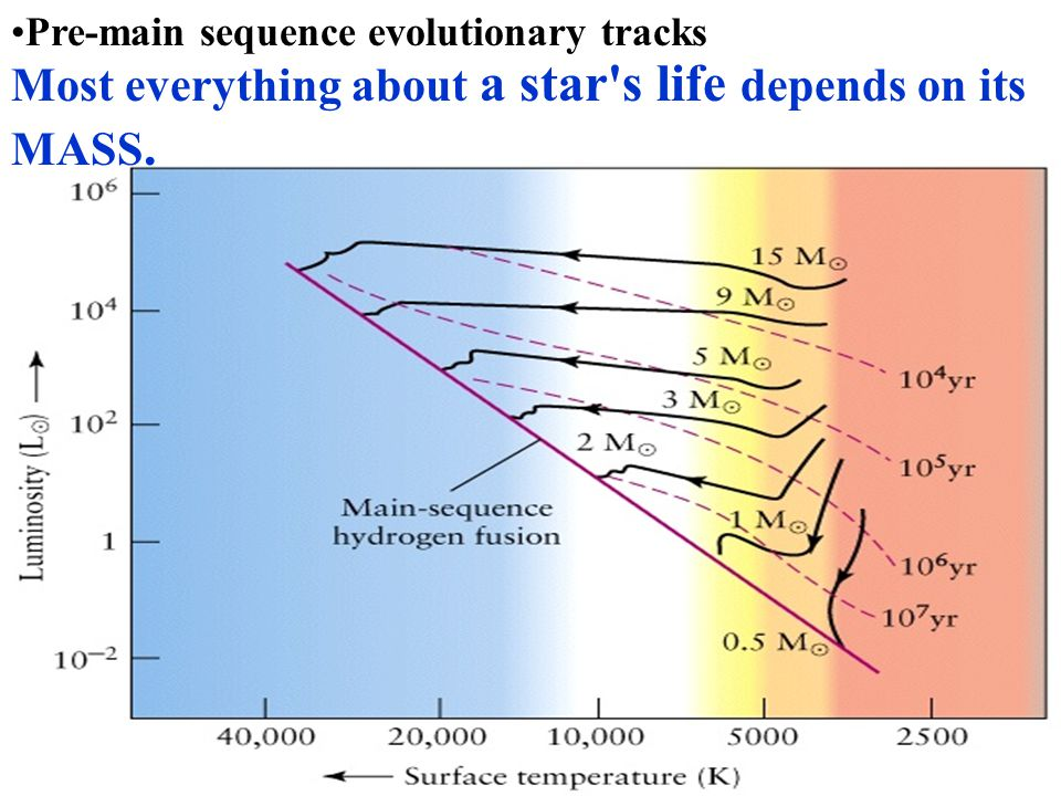 Pre-main sequence evolutionary tracks Most everything about a star's life depends on its MASS.