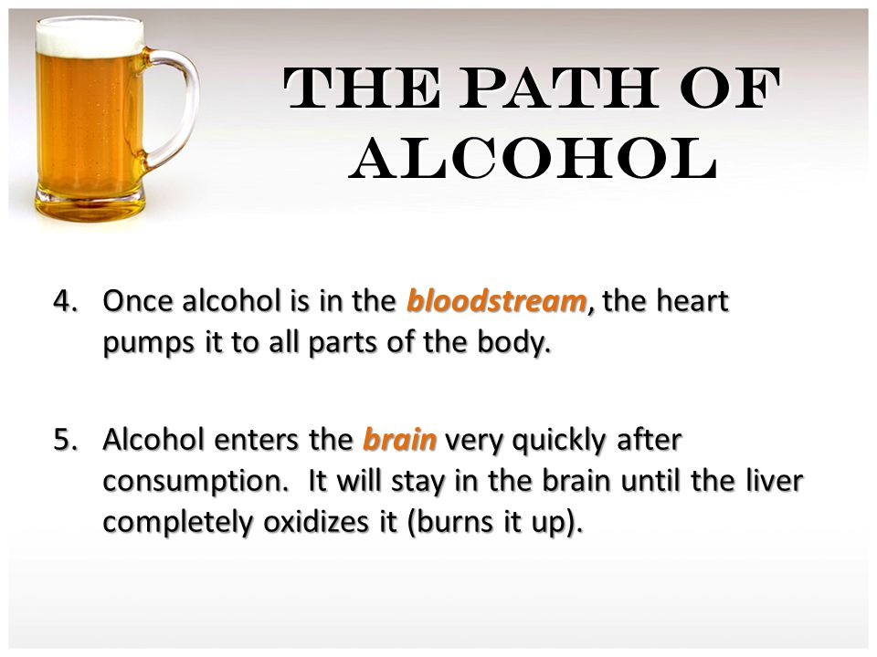 THE PATH OF ALCOHOL 4.Once alcohol is in the bloodstream, the heart pumps it to all parts of the body. 5.Alcohol enters the brain very quickly after c
